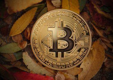 Golden bitcoin BTC coin in autumn leaves, macro closeup.